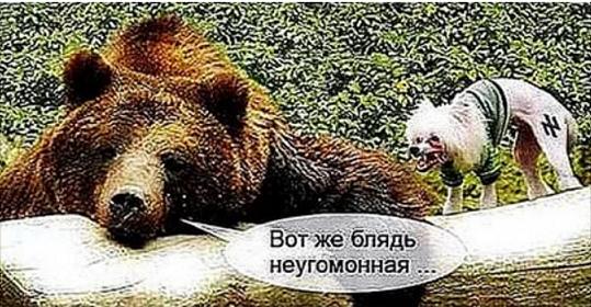 Аниксун-Драчева - неугомонная шалава.png